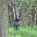 Black bear photographed in Colton, NY